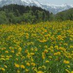 Früehlig im Glarnerland