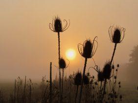 Seebach am Morgen