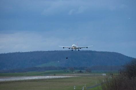 Landeanflug von 2 Vögeln
