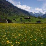 Frühling im Glarnerland