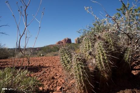 Kaktus in Sedona