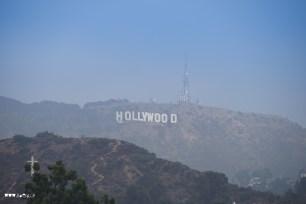 Hollywood hills forever