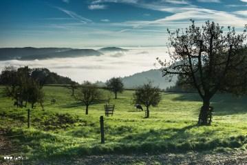 Das Limmattal Nebelmeer