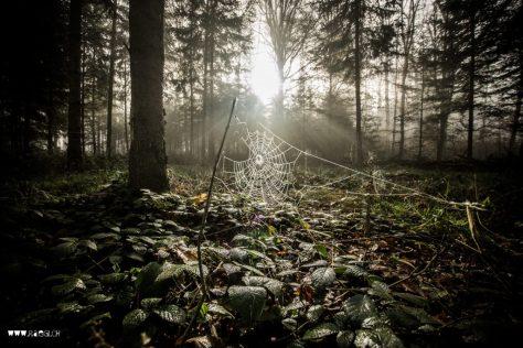 Spinnennetz an der Sonne