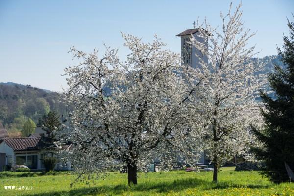 Killwangen im Frühling