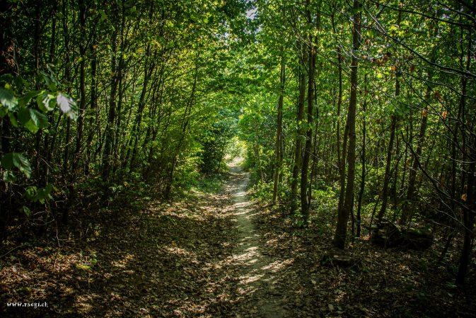 Single Trail