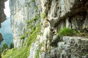 Klettertalent