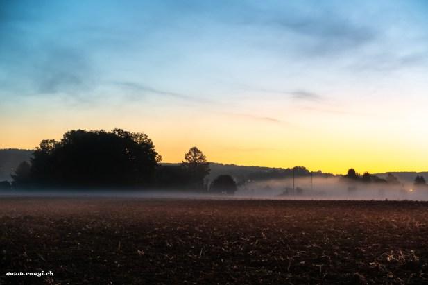 Nebel über dem Acker
