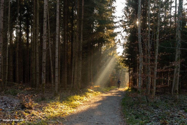 Mountainbikerin im Wald