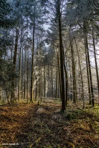 frostiger Wald