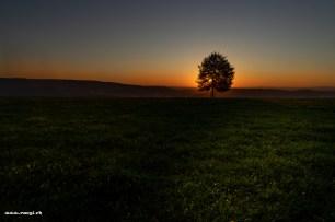 Morgenstimmung auf dem Sennenberg mit Blick ins Limmattal