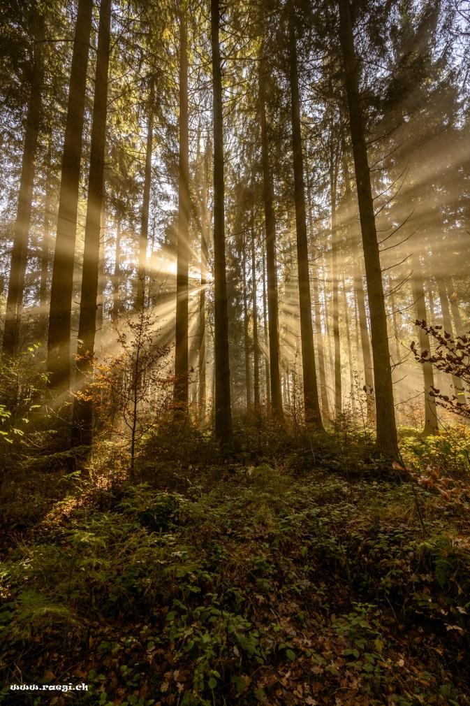 Strahlender Herbstwald