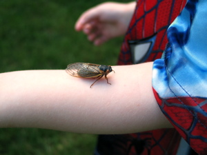 Jack with a cicada on his arm