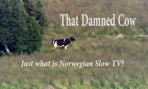 That Damned Cow