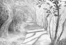 Warriston Path by Adele Gregory