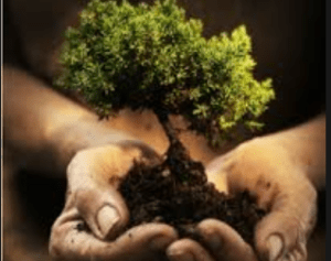 Natural Partners: Our Relationship With Trees @ Real Life Science Studio, John Hope Gateway Building | Scotland | United Kingdom