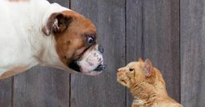 Cat and dog fight