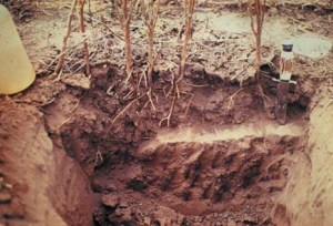 Clay pan formation