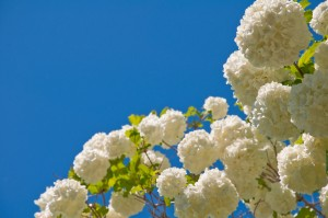 Blue Sky and Flowers
