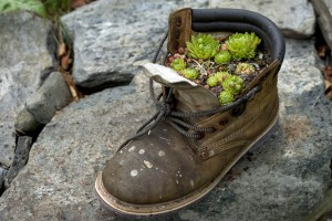 old-shoe-with-cactus