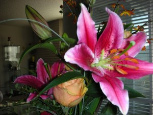 pink flower photo by Ragini