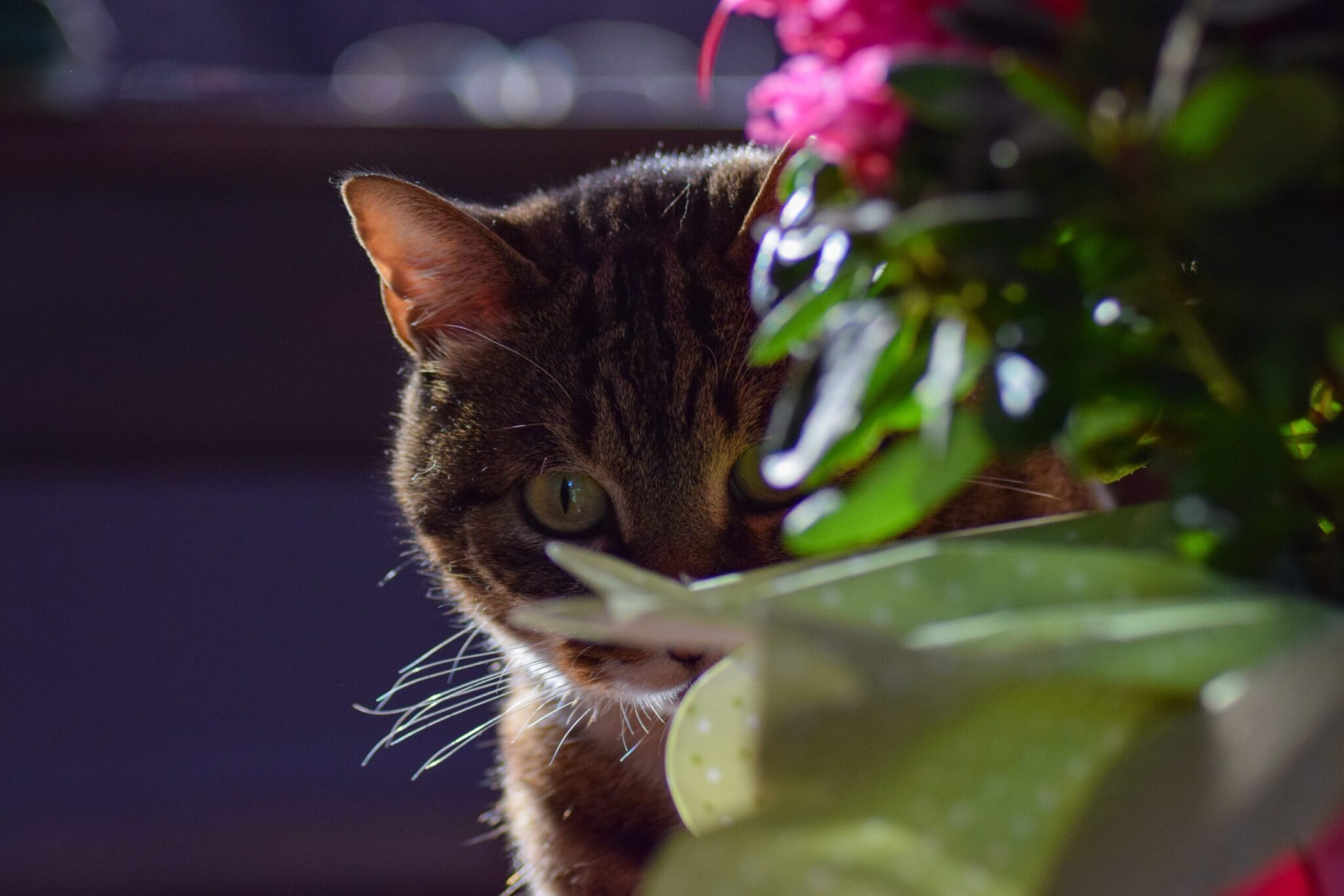 a cat hiding halfway behind a plant with a pink flower to show a reticence to reveal more of its presence and power to connect