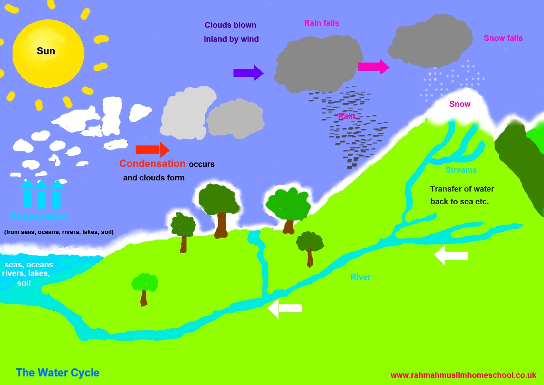 5th Grade Water Cycle For Kids Worksheet