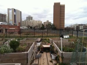 Raised garden beds in New Brunswick, NJ (Fall 2012)