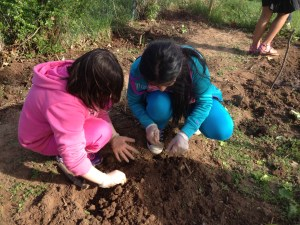 School Garden Club planting seeds from the Raíces Seed Library.