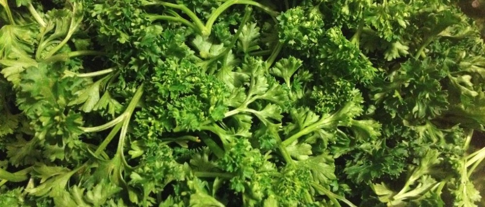 Fresh cut parsley