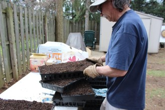 Stacking seedling trays, ready for planting.