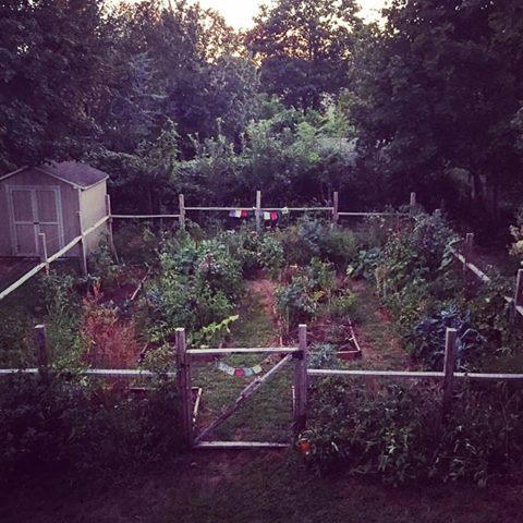 Andreea's beautiful garden.