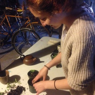 Working on tomatoes for the Raíces Seedling Sale with a cup of herbal tea.