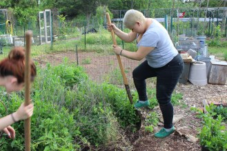 Rocío digging in a garden rescue operation. We are digging up and repotting an invasion of mint, catnip and lemon balm.