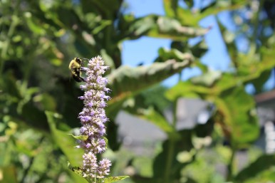 Pollinator playground