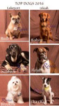 Top Dog Model winners from Rainbow Ag