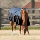 Horse Blankets 20% off