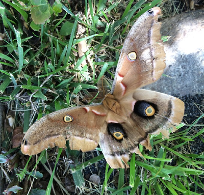 Flutterby / Moth of a thing