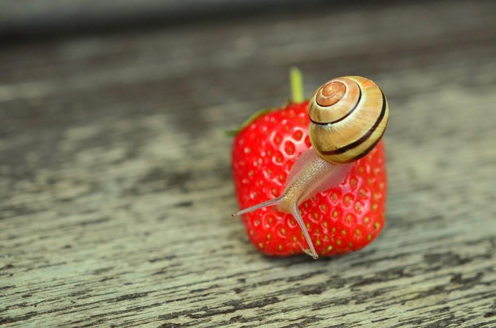 strawberry-799809_1280