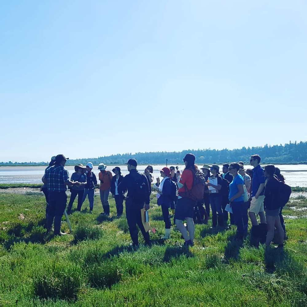 Learning more about the important role of salt marsh and eelgrass habitats...