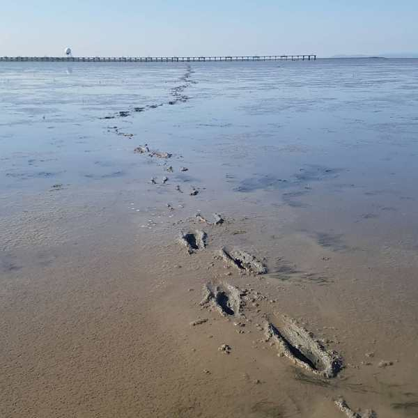 This is a photo of deep footsteps in the wet sand that go into the distance. It is a sunny day.