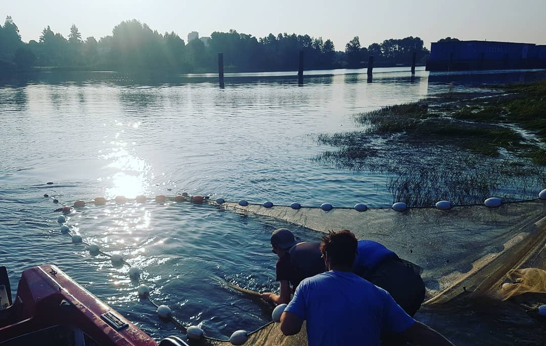 This is a photo of 3 researchers collecting data from a fish net in an estuary. The sun is a bit low still and coming from the left.