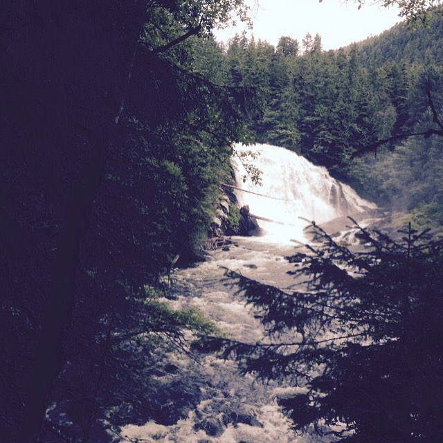 Full white waterfall visible between trees in the Great Bear rainforest