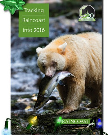 White spirit bear grizzly holding salmon in its mouth pictured over a stone strewn stream with the caption Tracking Raincoast into 2015 in green