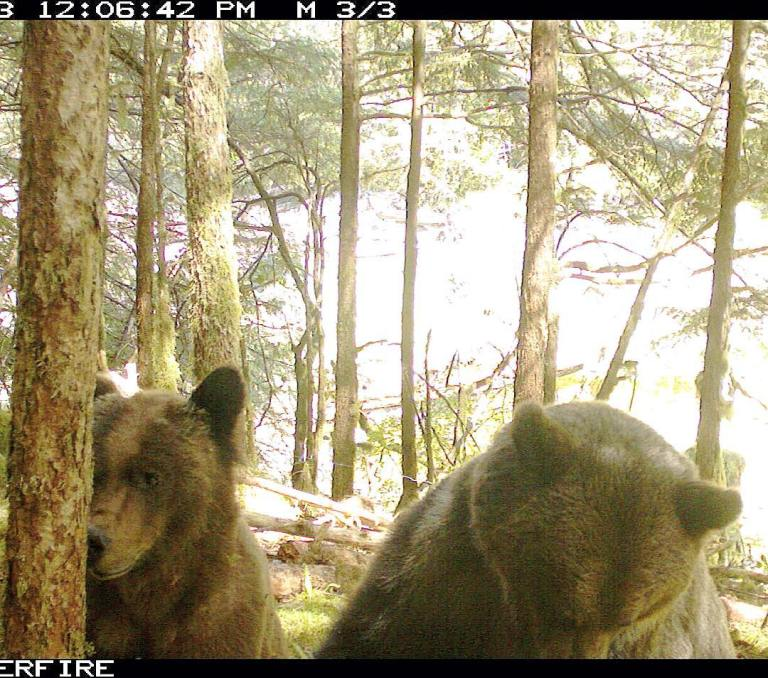 Site inspection by mama grizzly and cub
