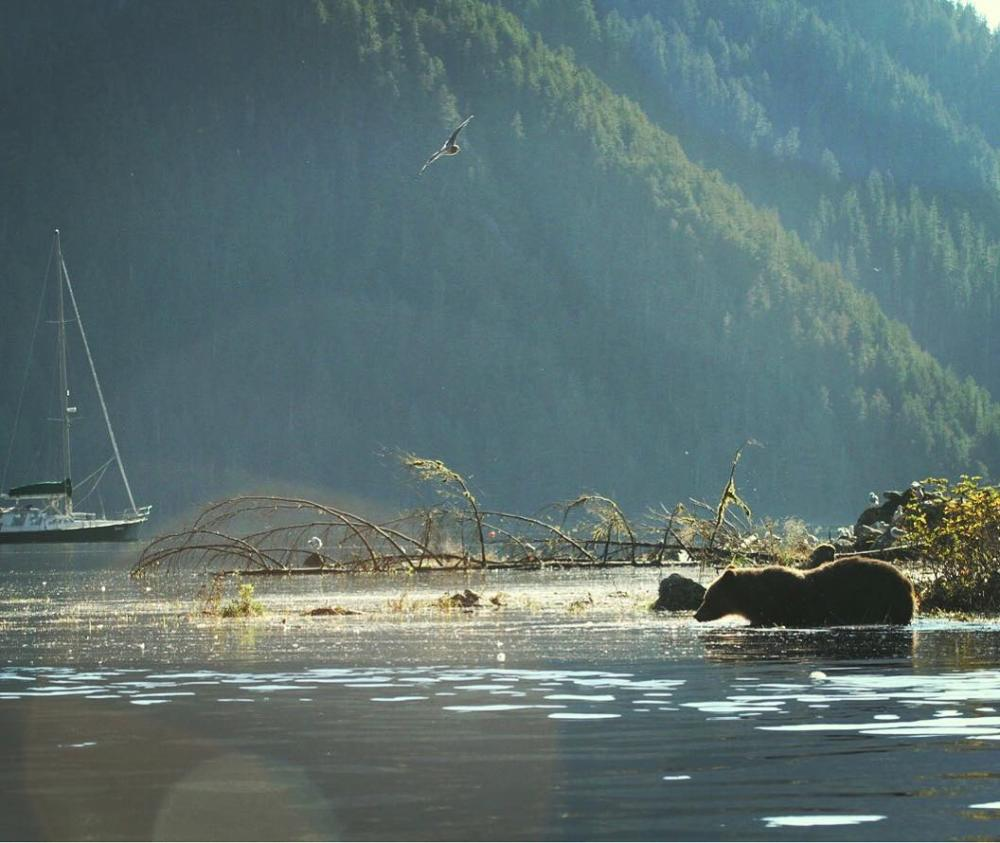 A chance to win a trip for two into the Great Bear Rainforest.