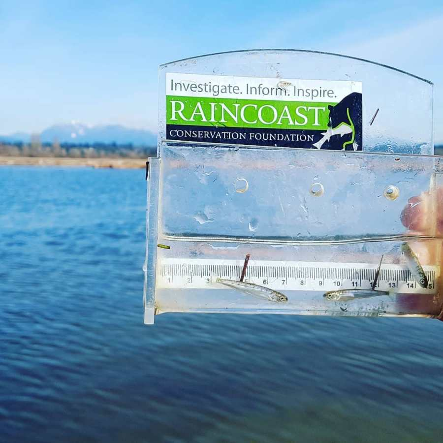 "A person is holding up a clear container with ""Raincoast Constervation on the label."" The container has two very small silver fish inside it. In the background is a blue sky and a blue body of water."