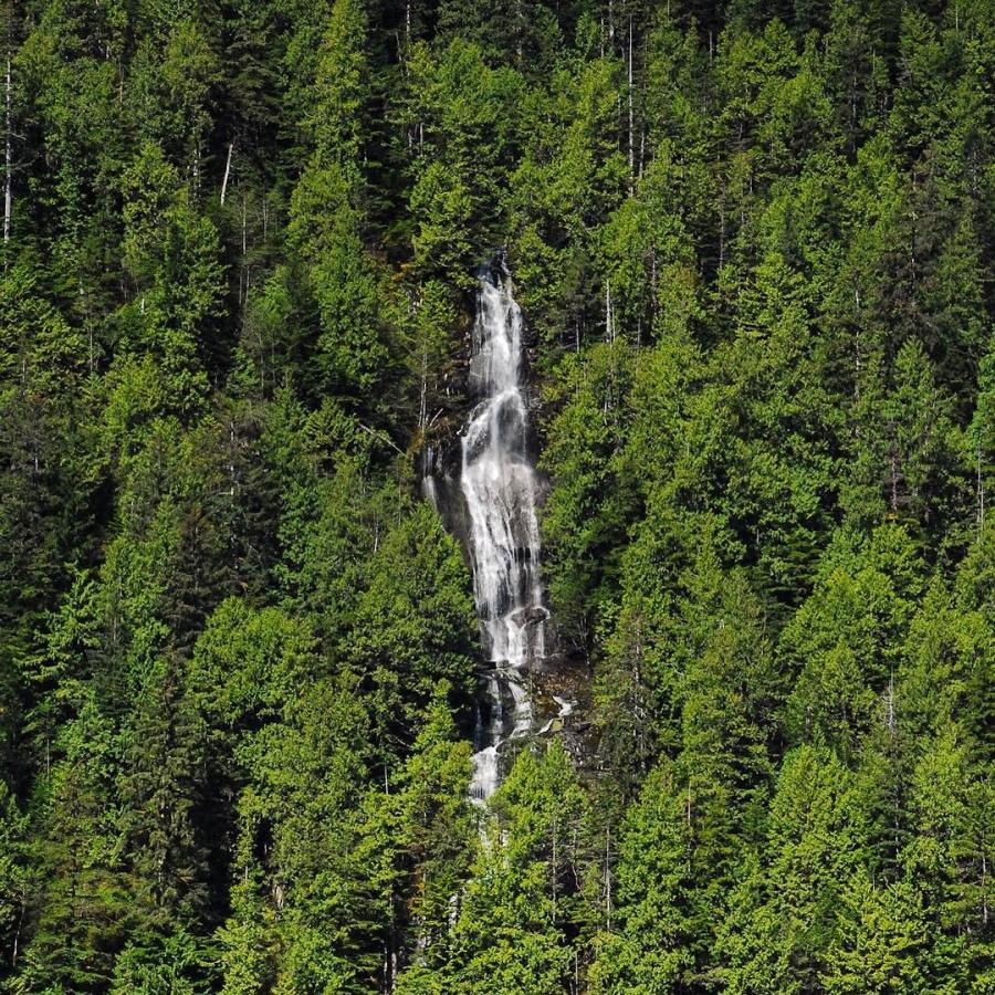 A waterfall tumbles down the centre of a mountain side with a forest of evergreens on either side.
