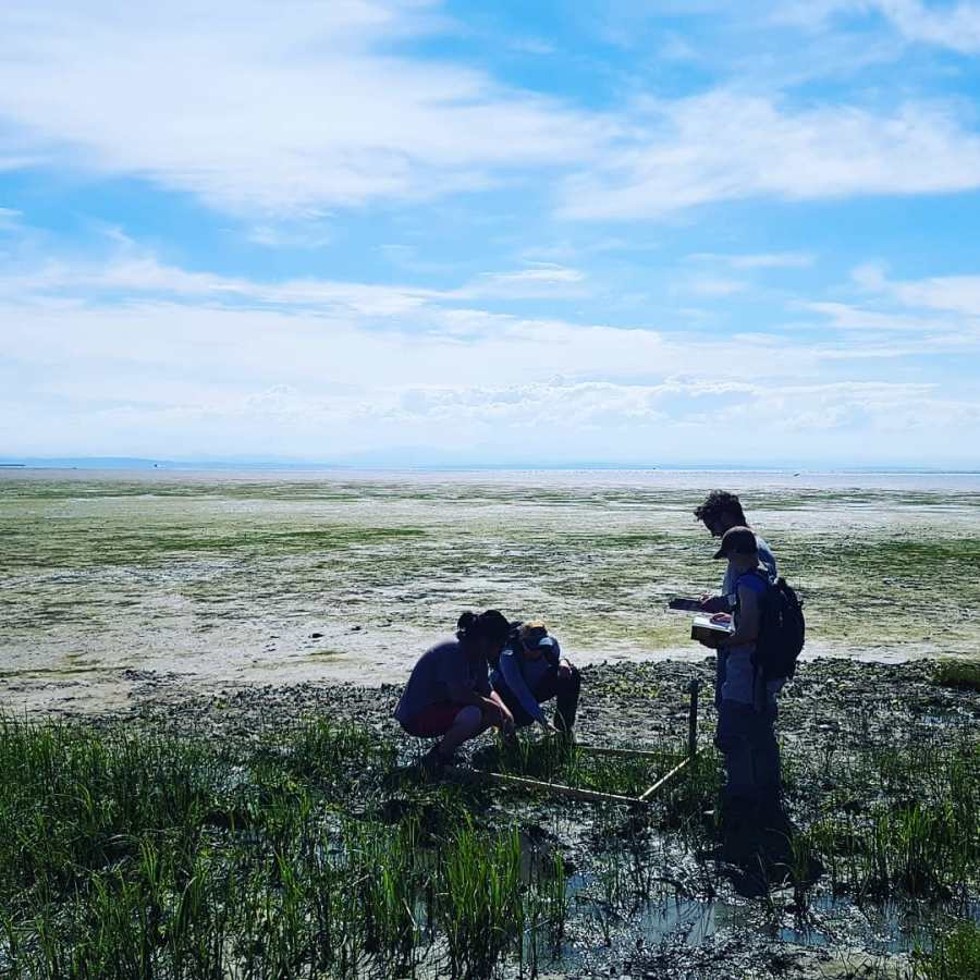 Two people, one kneeling down, doing research in a marshy area. The sky is blue with white clouds above them.