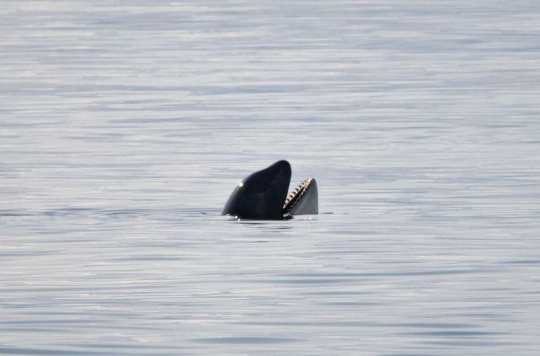 Returning to Court for the Killer Whales